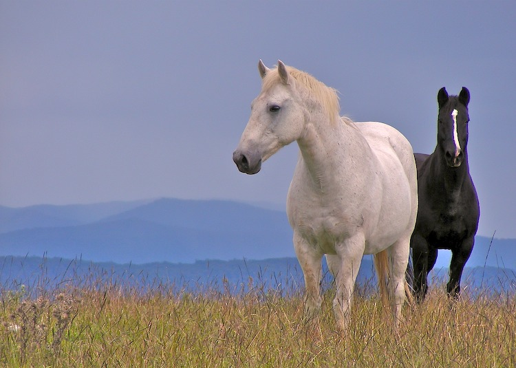 Horses with grey backdrop