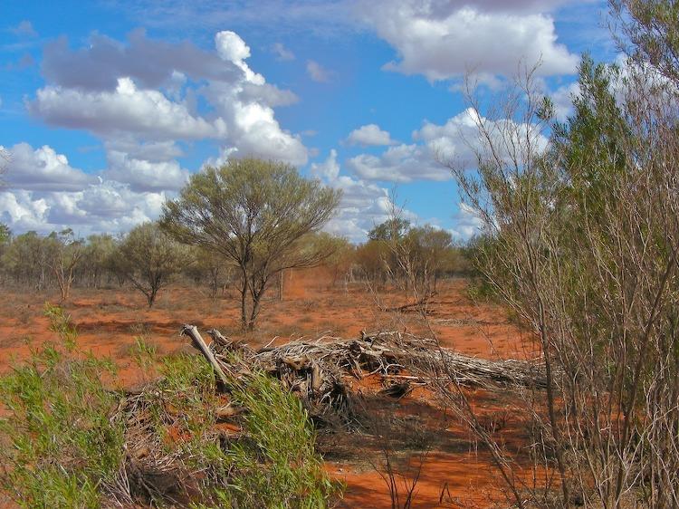 Bush landscape