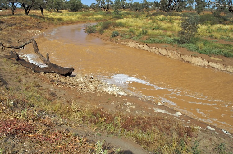 Strzelecki Creek in flood