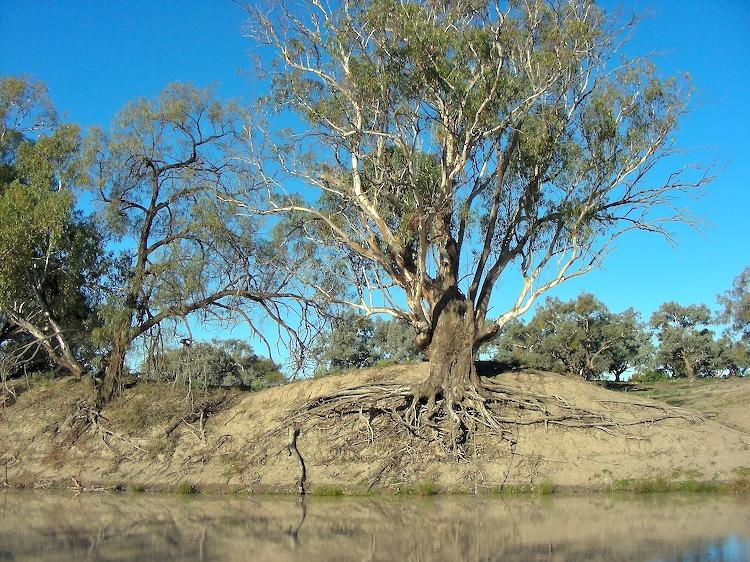 Darling River, Bourke